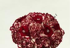 kwiaty na komunie - Pracownia Florystyczna Ta... zdjęcie 10