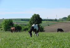 trening - Ośrodek Jeździecki Faruk zdjęcie 8