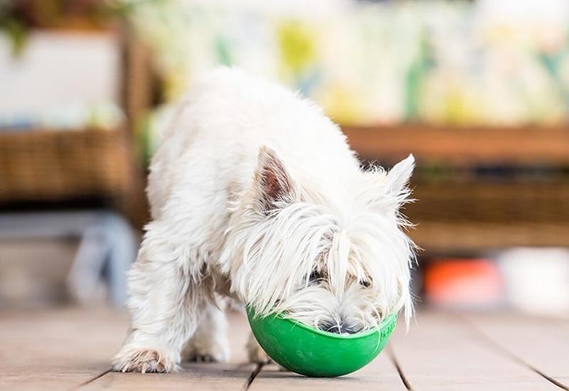 lokalizator dla psa - OFiuFiuPL zdjęcie 6