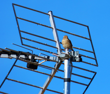 Antena naziemna