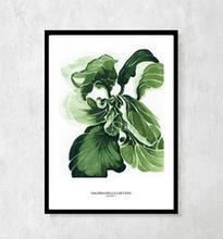 """Plakat botaniczny """"Sałata"""""""