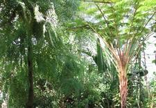 plant collections - PAN Ogród Botaniczny-Czrb... zdjęcie 4