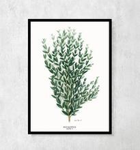"Plakat botaniczny ""Eukaliptus"" A4"