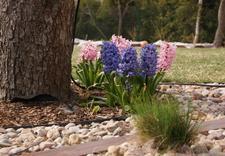 usługi ogrodnicze - Ogrody Barw zdjęcie 18