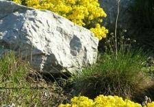 seed bank - PAN Ogród Botaniczny-Czrb... zdjęcie 5
