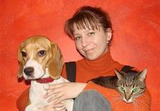 salon dla psów - Przychodnia weterynaryjna... zdjęcie 4