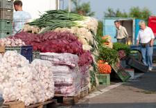 warzywa sprzedaż hurtowa - Targpiast Sp. z o.o. zdjęcie 13