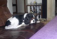 fryzjer dla psów - Spa dla Psa - psi fryzjer... zdjęcie 3