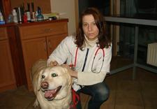 strzyżenie psów nierasowych - Przychodnia weterynaryjna... zdjęcie 7
