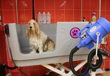 pielęgnacja psów kraków - URODA CZTEROŁAPA salon pi... zdjęcie 17