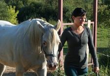ośrodek jeździecki ostoja - Ośrodek Jeździecki Ostoja... zdjęcie 1