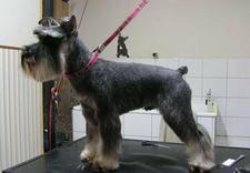 Salon Fryzjerski dla psów i kotów