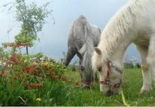 stajnia - Ośrodek Jeździecki Faruk zdjęcie 4
