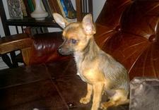 zumioffers - Spa dla Psa - psi fryzjer... zdjęcie 15