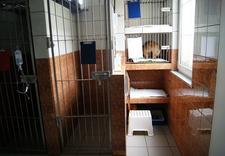Weterynarz, leczenie zwierząt