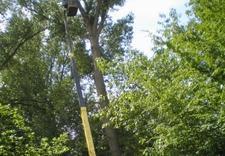 sprzedaż drewna kominkowego - Quercus Tomasz Sysło. Wyc... zdjęcie 6