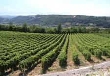 wino różowe - Winnica Gennari. Wina wło... zdjęcie 4