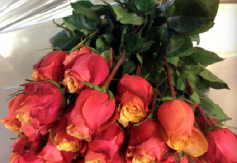 galeria kwiatów - Łódzka Kwiaciarnia Pokole... zdjęcie 1