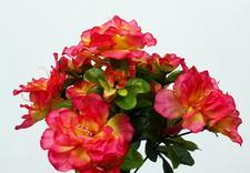 hurtownia kwiatów - Akces I. J. Ostrowscy Sp.... zdjęcie 2