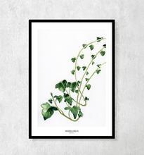 """Plakat botaniczny """"Bluszcz"""" A4"""