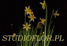 doniczkowe - Kwiaciarnia Szmaragdowy O... zdjęcie 5