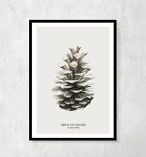 """Plakat botaniczny """"Szyszka"""" A4"""
