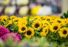 pokazy florystyczne - Dolnośląskie Centrum Hurt... zdjęcie 6