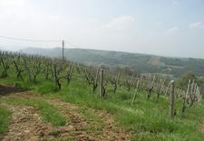 wina wytrawne - Winnica Gennari. Wina wło... zdjęcie 7