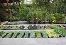 cebule - Centrum Ogrodnicze BAOBAB... zdjęcie 11
