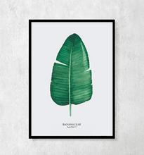 """Plakat botaniczny """"Bananowiec"""" A4"""