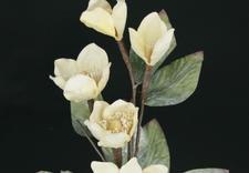 rafia - Faktor - Kwiaty i Rośliny... zdjęcie 8