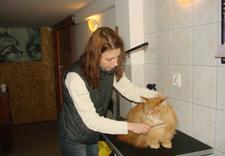salon dla psów warszawa - Przychodnia weterynaryjna... zdjęcie 3