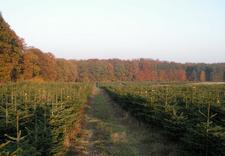 wnioski o wydanie decyzji o usunięciu drzew - Zakład Kształtowania i Pi... zdjęcie 34