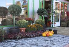 brzozy - Centrum Ogrodnicze BAOBAB... zdjęcie 1