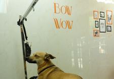 przysmaki dla psów - BOW WOW zdjęcie 4