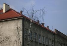 papy podkładowe - BGJ Sp. z o.o. zdjęcie 5