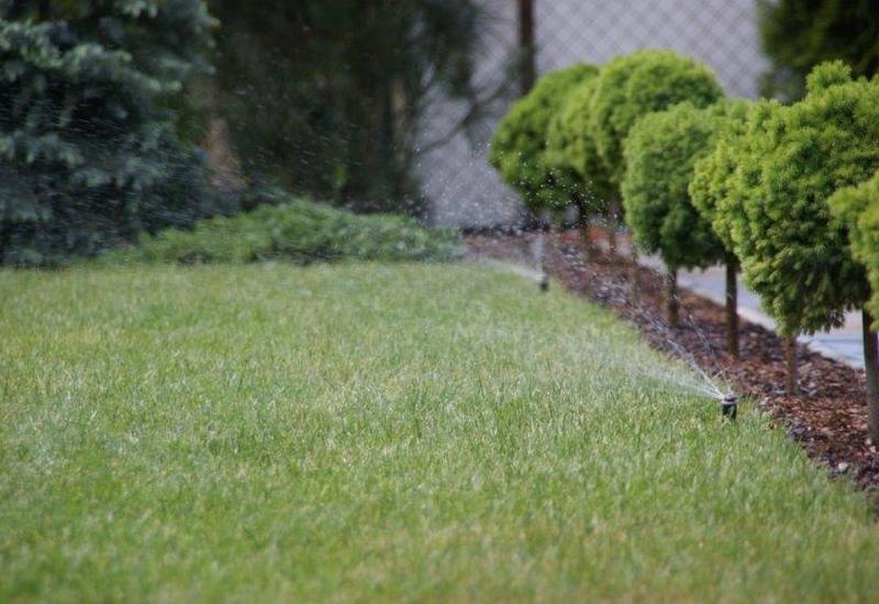 trawniki z siewu - Ogrody Barw zdjęcie 3