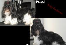 rozczesywanie - DOG FASHION Marta Bajczyk... zdjęcie 1