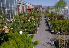 pilarki - Centrum Ogrodnicze Szarot... zdjęcie 1