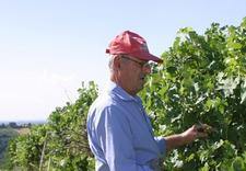 wino czerwone - Winnica Gennari. Wina wło... zdjęcie 3