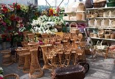 nasiona kwiatów - Centrum Ogrodnicze Szarot... zdjęcie 8