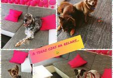 kąpiel dla psa - NEW JORK SALON PIELĘGNACJ... zdjęcie 9