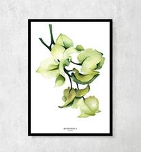 Plakat botaniczny Bugenvilla