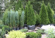 pergole - Centrum Ogrodnicze BAOBAB... zdjęcie 9