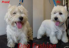 karma - DOG FASHION Marta Bajczyk... zdjęcie 9