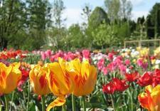 garden tours - PAN Ogród Botaniczny-Czrb... zdjęcie 3