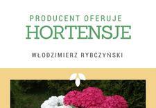 bratki wiosenne i jesienne - Gospodarstwo Ogrodnicze L... zdjęcie 3