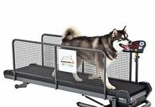 fizykoterapia zwierząt - VitaVet. Rehabilitacja zw... zdjęcie 2