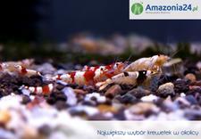 magazyn - Amazonia24.pl zdjęcie 3