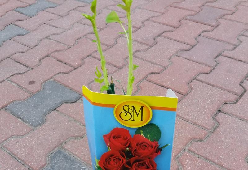 ziemia kwiatowa - Sklep Ogrodniczy Rolnik J... zdjęcie 3